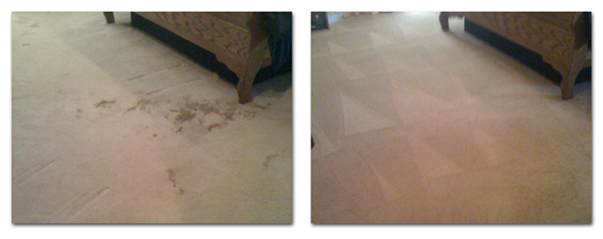 Green Solutions Carpet Cleaning - Pet Stain & Odor Service - Before & After
